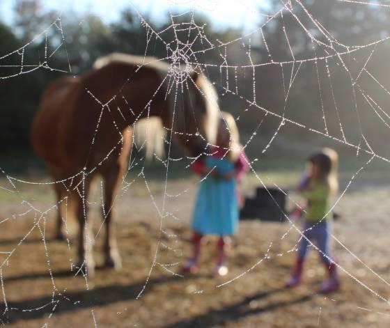 Pony behind Cobweb