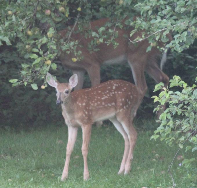 Wild Backyards : My Wild Backyard  Dawns Animal Connection