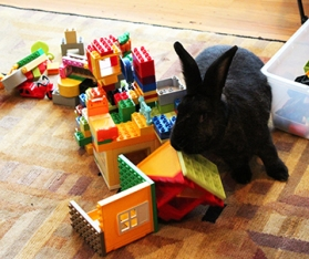 bunnynews