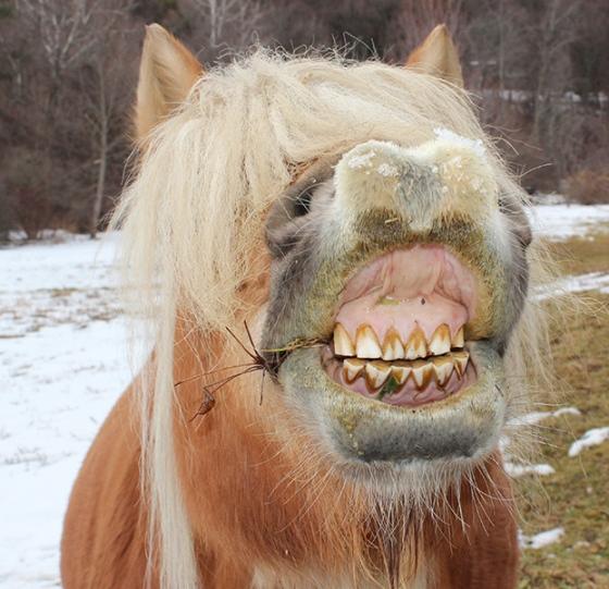 mallory-smile