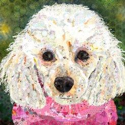 Cassie poodle